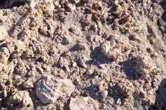 gammalt korallfossil Arkivbilder