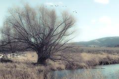 Gammalt krokigt träd bredvid en Duck Pond royaltyfri foto