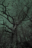 Gammalt kusligt träd Royaltyfria Foton