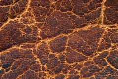 Gammalt läder strukturerar Arkivfoton