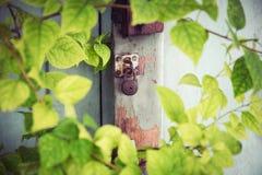 Gammalt lås för tappning på den gamla wood dörren med gröna murgrönasidor Arkivfoto