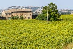 Gammalt lantbrukarhem och panorama av Osimo arkivbild
