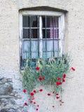 Gammalt lantligt italienskt fönster med hängande nejlikor, Dianthuscaryophyllus på San Pancrazio, södra Tyrol, Italien royaltyfri fotografi