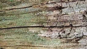 Gammalt lantligt trä Royaltyfri Fotografi