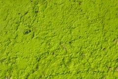 Gammalt ljust - grön betongvägg med skada och djup lättnad Textur för grov yttersida royaltyfria bilder