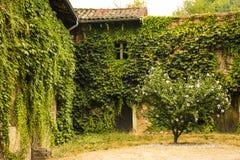 Gammalt murgröna-täckt hus Royaltyfria Bilder