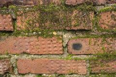 Gammalt murverk som täckas med mossa Royaltyfria Foton