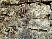 Gammalt murverk som täckas med mossa och visset gräs royaltyfri fotografi