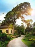 Gammalt och enormt träd och litet hus under det Arkivbild