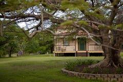 Gammalt och gammalt jakarandaträd för hus Royaltyfri Foto