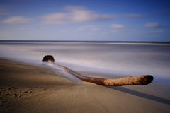 Gammalt palmträddrivaträ fotografering för bildbyråer