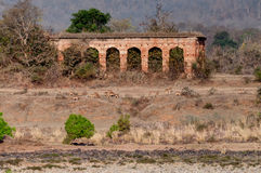 Gammalt Panna fort, flod och rivebed på Panna National Park, Madhya Pradesh, Indien Arkivbilder