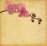 Gammalt papper med orkidén Arkivbilder