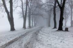 Gammalt parkera på en vinterdag med mist Royaltyfri Bild