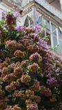 Gammalt ramhus, i att blomma royaltyfri foto