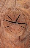 gammalt rikt texturträ för korn Arkivfoto