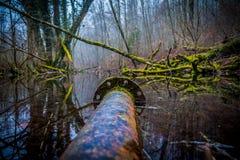 Gammalt rostat metallrör i en flod eller en swampland royaltyfri fotografi