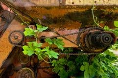 Gammalt rostigt kugghjulhjul med chain och gröna växter Arkivfoto