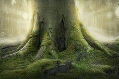 gammalt rotar treen Royaltyfri Bild