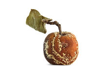 gammalt ruttet för äpple fotografering för bildbyråer