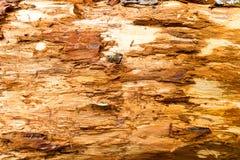 Gammalt ruttet trä Royaltyfria Foton