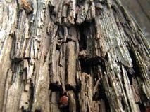 Gammalt ruttet trä royaltyfria bilder