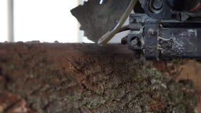 Gammalt sågverk, snitttimmer som ska stigas ombord lager videofilmer
