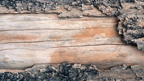 gammalt skällträd som ut tappas arkivfoto