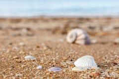 Gammalt skal Rapana mot havet Fotografering för Bildbyråer