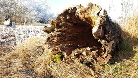 Gammalt som trä Arkivfoton