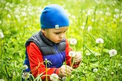 Gammalt spela för pys som 4 - 5 år är utomhus- på bakgrund Ung pojke som sitter i slående maskros för fält Fotografering för Bildbyråer
