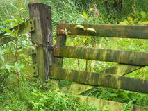 gammalt staket Royaltyfri Foto