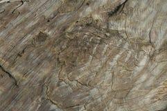gammalt structireträ Arkivbild
