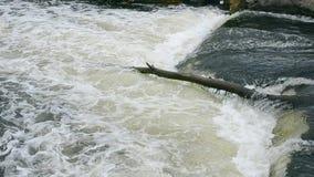 Gammalt stupat träd i en stor ström av vatten stock video