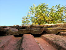 gammalt tak Arkivfoton