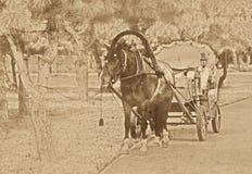 Gammalt tappningfoto av hästen Royaltyfri Foto