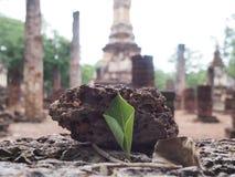 gammalt tempel thailand Arkivbilder