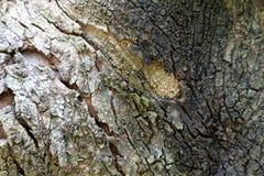 gammalt texturerat trä Arkivfoto