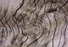 gammalt texturträ Arkivfoton
