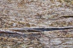 gammalt texturträ Royaltyfri Fotografi
