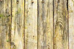 gammalt texturträ för bakgrund Fotografering för Bildbyråer