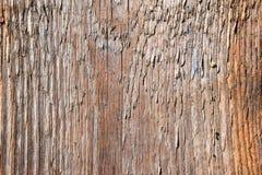 gammalt texturträ för bakgrund Royaltyfria Bilder