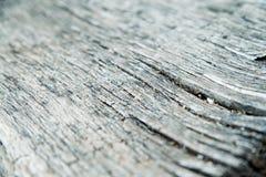 gammalt texturträ Grå färgbakgrund fotografering för bildbyråer