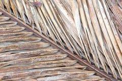 Gammalt torkat kokosnötblad Fotografering för Bildbyråer