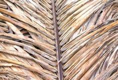 Gammalt torkat kokosnötblad Arkivbild