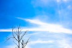 Gammalt torrt träd med filialer och inga sidor mot en blå himmel som Royaltyfri Fotografi