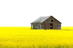 Gammalt träövergett hus på det gula fältet Arkivfoton