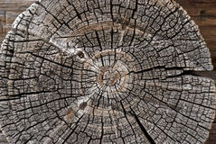 gammalt trä Arkivbild