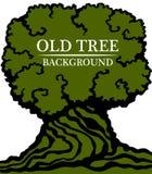 gammalt trä för bakgrund Bild av en stor stam och en tät krona av ett gammalt träd Stock Illustrationer