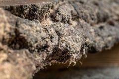 gammalt trä för bräde Fotografering för Bildbyråer